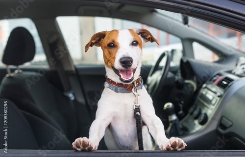 fototapeta na ścianę Cute dog sit in the car on the front seat
