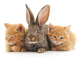 Cats and rabbit.