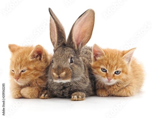 Foto Murales Cats and rabbit.