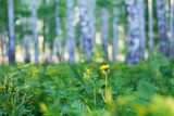Field wild flowers close-up in the sun, toned photo. Blurred natural background with sunlight and place for text. Concept summer, spring nature. - 209367857