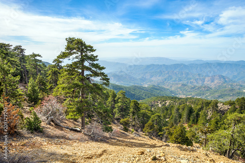 In de dag Cyprus Mountain forest landscape, Troodos nature trail, Cyprus