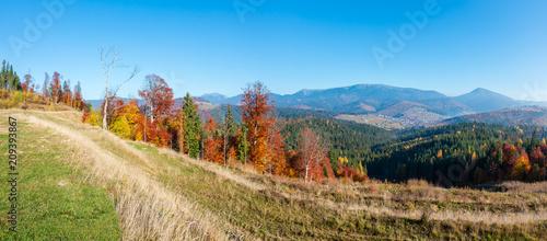 Morning autumn Carpathians landscape. - 209393867