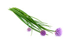 Fresh green chives, garden herbs, with their purple flowers Isolated against a white background. - 209397024