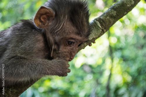 Foto Murales Monkey