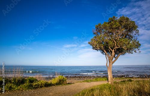 Foto Murales A beach or coastal walk with a tree and calm sea