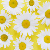 Composition of chamomile  flowers on a yellow background, top view, creative flat layout.