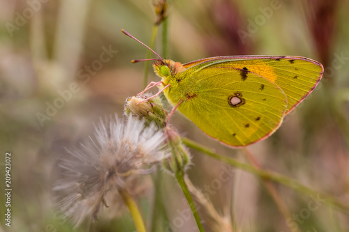 Fotobehang Vlinder Flower with butterfly in a nature area of Madrid