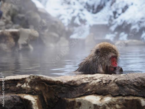 Foto Murales Snow monkey park