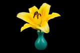 Lilie in der Vase