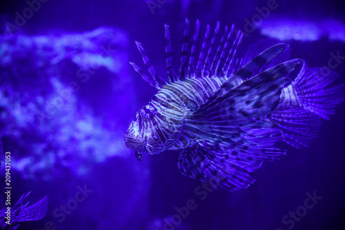 Foto Spatwand Violet Beautiful Sea World. Sea fish at depth. Underwater world with corals and tropical fish. Underwater scene. Underwater world. Underwater life landscape.