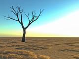 dead lonely tree in the desert - 209438888