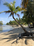 Palm tree at the beach - 209442679