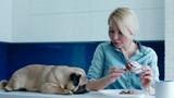 The owner teasing the dog with a bun. Pug with young blonde woman on the kitchen. Daily light. - 209446478