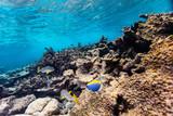 Coral reef underwater - 209450429