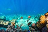 Coral reef underwater - 209450810