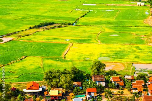 Aluminium Lime groen Beatiful green rice fields near Phnom Krom Village, Siem Reap, Cambodia
