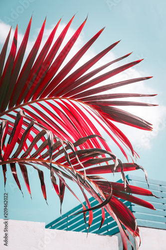 Red colored palm tree against pale blue sky. Vivid and pastel colors, creative colorful minimalism. Vertical - 209462022