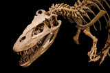 Dinosaur skeleton on black isolated background
