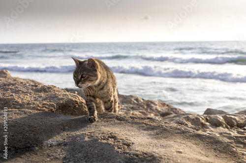 Cat at the sea - 209504893