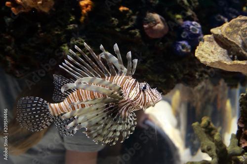 Foto Murales Tropical fish swimming past coral