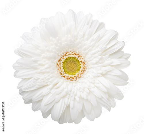 Fotobehang Gerbera White Gerbera flower isolated on white background.