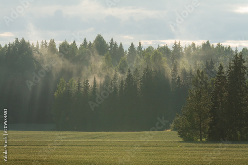 Foto Murales foggy forest