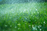Grass with rain drops. Watering lawn. Rain. Blurred green grass background with water drops closeup. Nature. Environment concept - 209539699