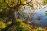 Bäume am Prerowstrom in Prerow - 209541656