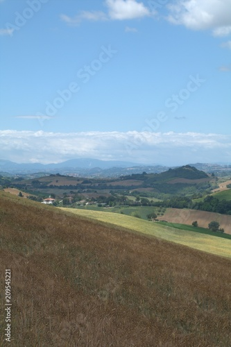 Foto Murales Italy,field,hill,countryside,landscape,crops,view,panorama,green,horizon,clouds,cereals,hilly landscape
