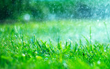 Grass with rain drops. Watering lawn. Rain. Blurred green grass background with water drops closeup. Nature. Environment concept - 209546056