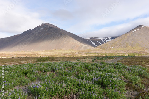 Foto Murales Iceland landscape with mountains and lupine flowers field