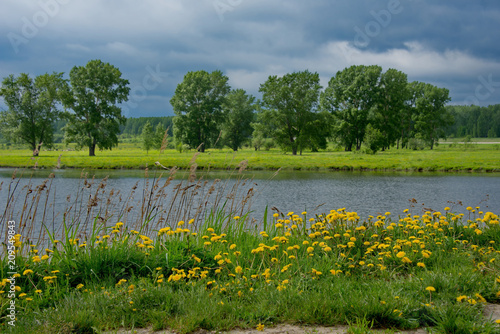 Fotobehang Blauwe jeans Russia. The South Of Western Siberia. Blooming dandelions on the lake