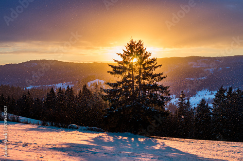 Foto Murales Winter sunrise with lonely tree, Little Poland landscape