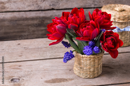 Foto Murales Red tulips and blue muscaries flowers in bucket on aged textured  background.