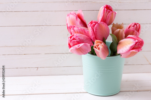 Fresh pink tulip flowers  in  mint color bucket on  white wooden  background.