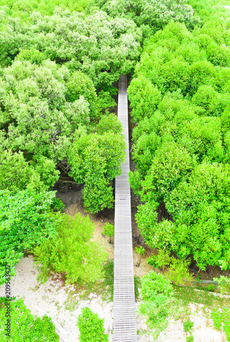 mangrove forest view in the Rayong bay Thailand - 209563427