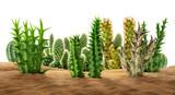 Desert plants on sand - 209565261