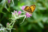Butterfly and wildflowers in an olive grove on Zakynthos island, Greece - 209566686