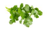 bundle of cilantro isolated on white - 209569472