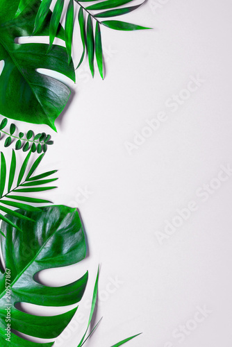 Tropical green leaves palm fronds isolated on white background. the apartment lay, top view