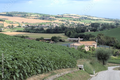 Fotobehang Khaki countryside,Italy,sunflowers,field,landscape,view,hill,sky,crops,panorama