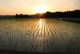 夜明けの田園風景/富山の田舎の夜明けの田園風景 - 209612640