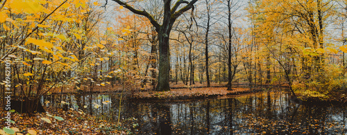 Beautiful forest lake with huge oak surrounded by golden leaves in the autumn day - 209623031