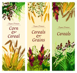 Cereal, grain and vegetable banner of healthy food - 209634028
