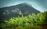Villa Capao Palmeiras Bahia Brazil 08/15/2015, banana plantation in stone mountain