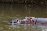 A meeting of pachyderms in the water. Meru, Kenya - 209640625