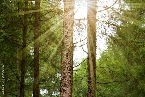 Foto Murales Bäume in einem Wald