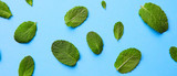 pattern of fresh green mint leaves on a blue background - 209651474