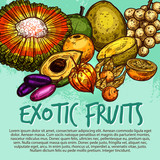 Exotic fruit and tropical berry sketch poster - 209652482