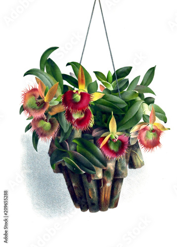 Illustration of orchid - 209655288